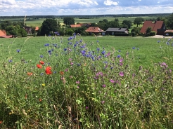 Insektenfreundliches Binnen Neue Bergstr 2019 Teil1©SJB Binnen
