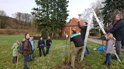 PM Obstbaumschnitt 29.02.2020©SJB Binnen